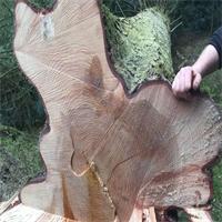 Habitat et Bois : le bois acteur du bien-être
