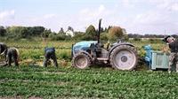 Les jardins de Cocagne de Thaon, un projet social et solidaire