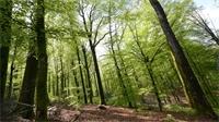 Regroupement forestier : nouvelles modalités en vue