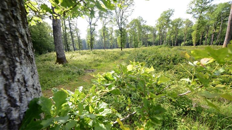 6ème semaine de la forêt en Déodatie ce weekend