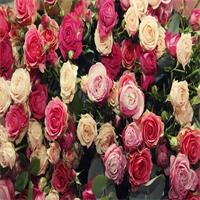 Autrey voit la vie en roses